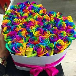 51 радужная роза сердце R815
